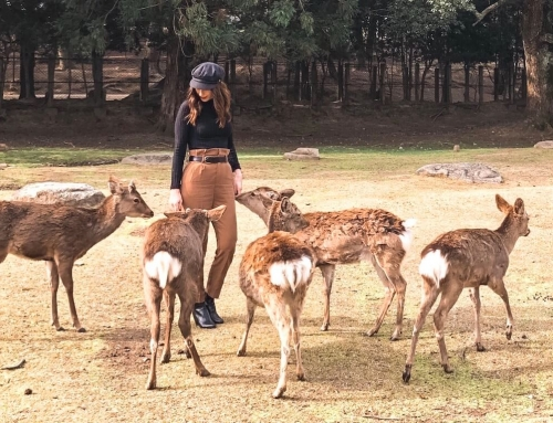 "A Day Trip to Nara: Japan's ""City of Deer"""