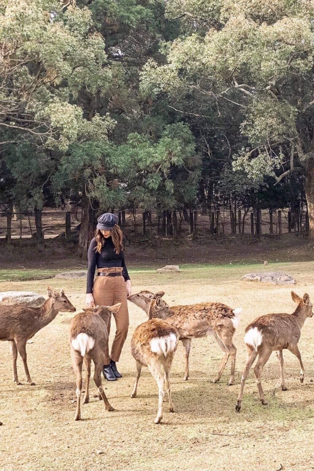 Feeding deer on a day trip to Nara, Japan