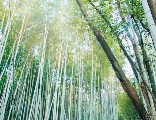Best Things to Do in Arashiyama, Japan
